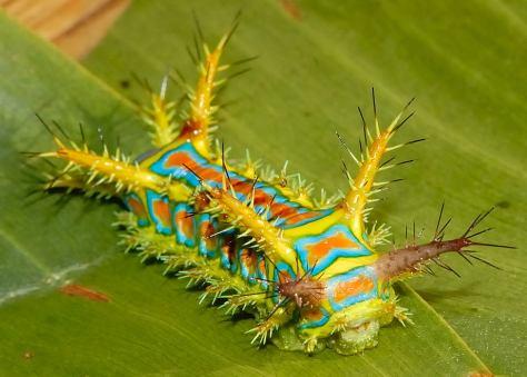 caterpillar-8