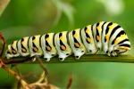 caterpillar-05