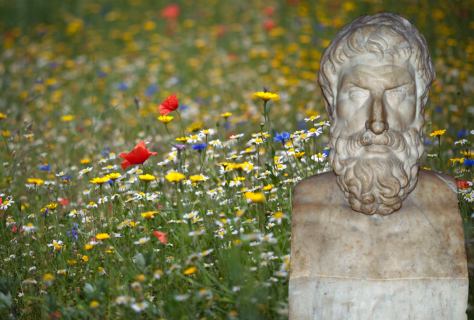 Wildflowers-by-Tim-Daniels-Epicurus